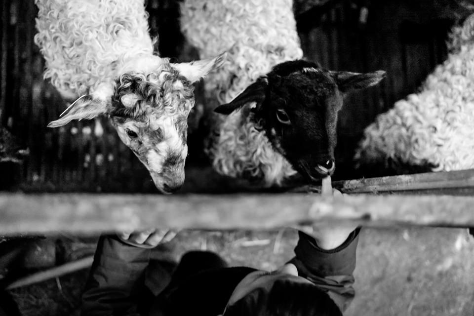 FOTOGRAFIA-INFANTIL-MIRANDAOLA-8